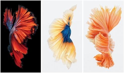 Обои для ios9 с рыбками