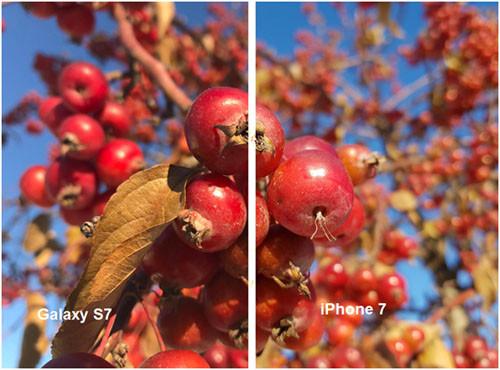 Эффект боке на снимках, отснятых при помощи iPhone 7 и Samsung Galaxy S7