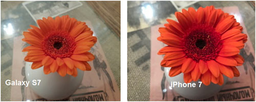 Фотографии цветка, снятая на Samsung Galaxy S7 и iPhone 7