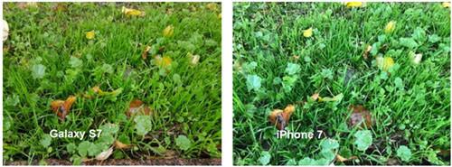 Фотографии, отснятых на Samsung Galaxy S7 и iPhone 7 днем